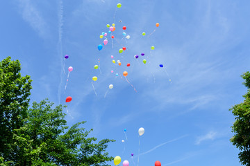 Multicolored balloons flying between green trees and blue sky - Image