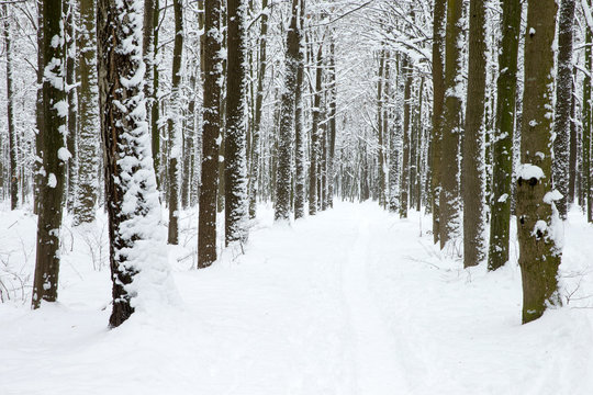 winter forest and the road
