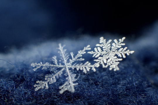 Macro photo of beautiful snowflakes