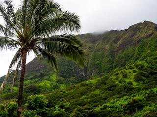 palmier dans la jungle