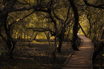 Photo Stands Road in forest Wooden path going through a beautiful forest