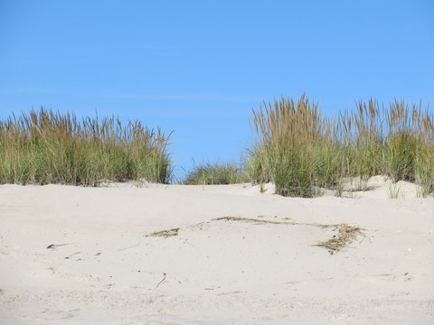 Clear Blue Sky, Marram Grass, and White Sand at Shinnecock East County Park in Southampton, Long Island, New York.