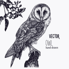 Vector hand drawn ink pen illustration. Barn Owl sitting on a tree stump. Flower decoration in the corner. One color design. Isolated image. Sketch artwork