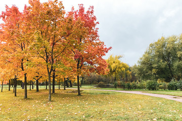 View of the beautiful autumn park, yellow orange maple trees in the foreground