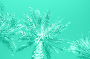 Tropical palm trees over mint color sky. Summer and travel concept. Holiday background. Trendy green and turquoise color. Palm leaves and branches texture with copy space. Banner.