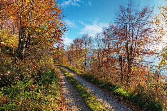gravel road through autumn forest. path on the edge of a hill side. wonderful autumn weather at sunny forenoon