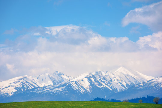 snow capped western high tatras ridge in springtime. beautiful sunny weather with clouds on a blue sky. green grassy hill on the foreground of a landscape. idyllic scenery of slovakia