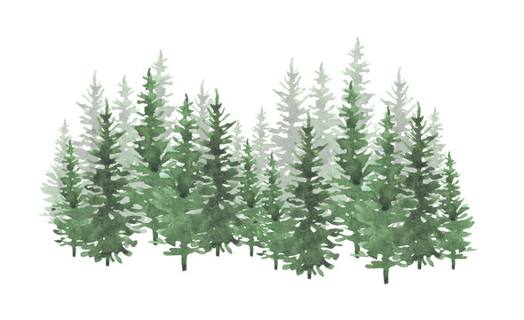 Hand drawn watercolor coniferous forest illustration, spruce. Winter nature, holiday background, conifer, snow, outdoor, snowy rural landscape.Mysterious fir or pine trees  for winter Christmas design