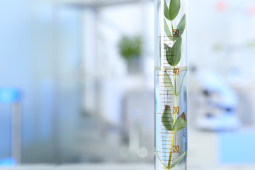 Graduated cylinder with plant in laboratory, closeup. Space for text
