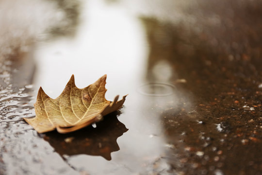 Autumn leaf in puddle on rainy day