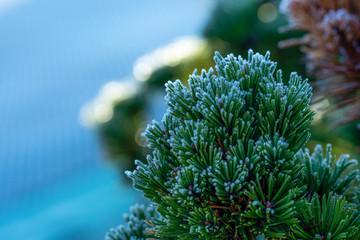 Obraz Zimowy kwiat - fototapety do salonu