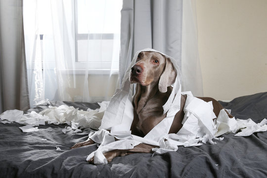 Happy dog making mess with papers on bed