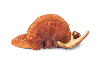 Lingzhi Mushroom Ganoderma Lucidum Isolated on white background..