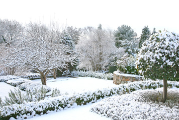 winter garden with snow and trees
