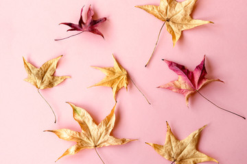 Yellow autumn leaves on pink background, background, texture Wall mural