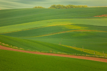 Photo sur Aluminium Vert Moravian fields in spring time, green and yellow landscapes in Czech Republic has awesome structure