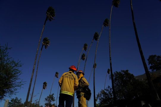 Firefighters tackling the Dexter fire have a discussion under palm trees bending from the wind in Riverside