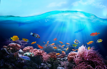 Poster Coral reefs Rich colors of the coral reef. Underwater sea world. Colorful tropical fish. Ecosystem.