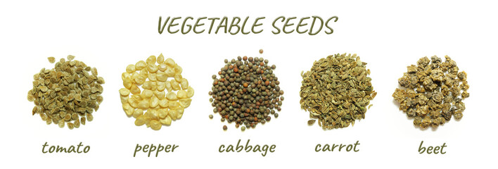 Poster Fresh vegetables Vegetable seeds closeup: tomato, pepper, cabbage, carrot, beet. Set isolated on white background.