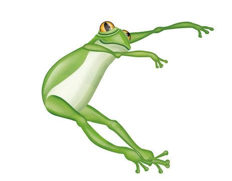 grenouille, verte, amphibien, animal, isolé, blanc, rainette,  saut, nature, faune, grenouille, crapaud, macro, gros plan, joli, yeux, jouet, petit, dessin animé, illustration, attitude, dense