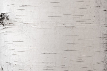 Birch bark, natural wood texture. as a background Wall mural
