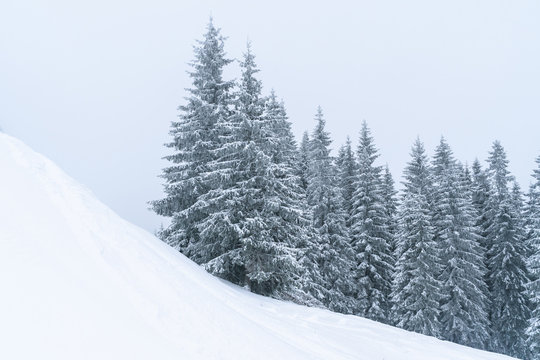 Winter mountains landscape of Carpathians hill and christmas tree snow covered