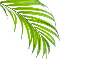 tropical coconut leaf isolated on white background, summer background Wall mural