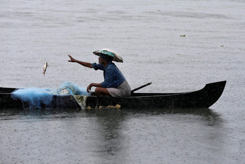 A fisherman collects fish from a net in the waters of Vembanad Lake during heavy rains caused by Cyclone Maha in Kochi