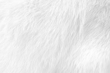 Cat fur texture , white or gray animal patterns for nature background Wall mural
