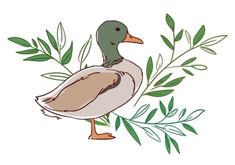 Fotoväggar - Hand drawn duck with leaves isolated on a white background. Sketch bird, vector illustration.