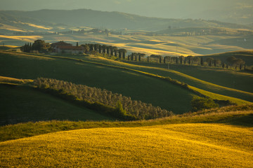 Acrylic Prints Olive Spring in Tuscany rolling fields in Pienza Firenze Siena Italy