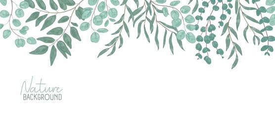 Nature vector realistic background. Foliage backdrop with place for text. Botanical composition, shrub branches with green leaves. Natural leafage, frondage. Floral hand drawn illustration.