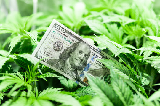 Revenues in the marijuana industry and the medical industry. American dollar bill on cannabis leaves. Taxation and marijuana. The economy of hemp industry. Tax on weed. Money and pot.