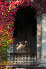 Stone arch entrance wall with red ivy. autumn colors