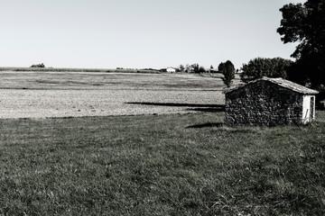 Spoed Foto op Canvas Khaki Plantation of ripe corn