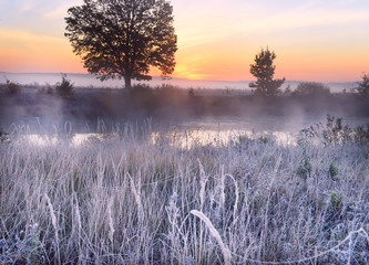 Photo sur Aluminium Lavende The first frost and frost on the grass by the river. Beautiful oak on the riverbank in the fog at dawn. Beautiful late autumn landscape in the wild.