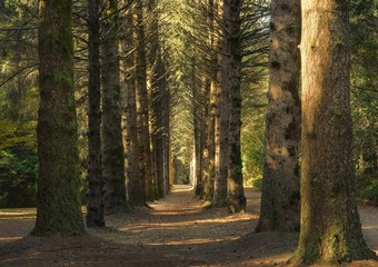 Foto op Aluminium Weg in bos Beautiful shot of a pathway in the middle of a forest with big tall trees at daytime