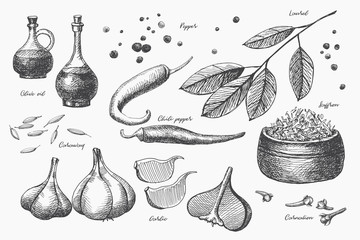 Hand drawn set of spices for cooking. Spicy spices: carnation, chili peppers, garlic, laurel, cardamom and olive oil on a light isolated background. Organic food concept. Vector illustration