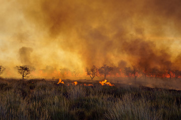 Bush fire in the Western Australian outback (Pilbara) with heavy, dark smoke. Bushfires are an important part  in the cycle of local ecosystems.