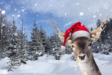 Rentier mit Nikolausmütze im Winter
