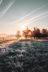 Spoed Foto op Canvas Chocoladebruin Calm and wonderful peaceful winter morning with frozen grass meadow and white nature and colorful ealry morning sunrise tones. Frosty white winter wonderland in the countryside with shadows
