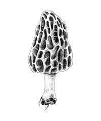 Fototapeta Hand drawn colorful morel mushroom obraz