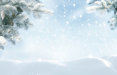 Wall Mural - Snowfall in winter forest.Beautiful landscape with snow covered fir trees and snowdrifts.Merry Christmas and happy New Year greeting background with copy-space.Winter fairytale.