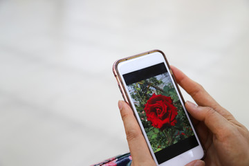 Closeup of a picture on smartphone carried by woman's hands.