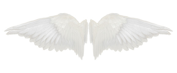 wings isolated on white background