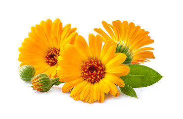 Calendula. Flowers with leaves isolated on white
