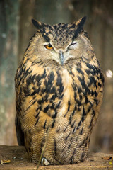 Owl resting on tree