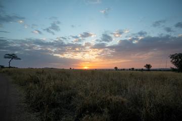 African sunset Fotoväggar
