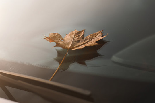 autumn leaf on a car windshield. yellow maple leaf on glass