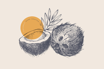 Hand drawn coconut. Natural nuts, chopped and whole. Organic food concept. It can be used for the design of cosmetics, menus and packaging. Vintage botanical illustration on light isolated background.